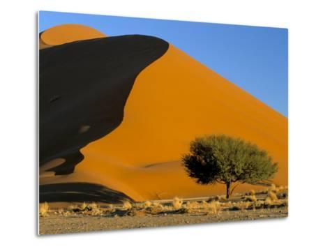 Sand Dune, Sossusvlei Dune Field, Namib-Naukluft Park, Namib Desert, Namibia, Africa-Steve & Ann Toon-Metal Print