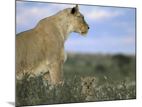 Lioness (Panthera Leo) with Small Cub, Kalahari Gemsbok Park, South Africa, Africa-Steve & Ann Toon-Mounted Photographic Print