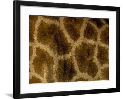 Close-Up of Coat Pattern of Giraffe (Giraffa Camelopardalis), Etosha National Park, Namibia, Africa-Steve & Ann Toon-Framed Art Print