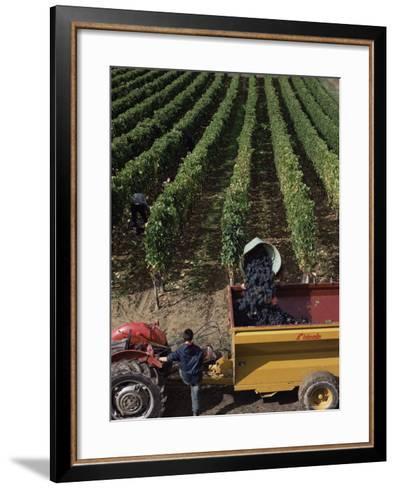 Harvesting Grapes, St. Emilion Area, Aquitaine, France-Adam Woolfitt-Framed Art Print
