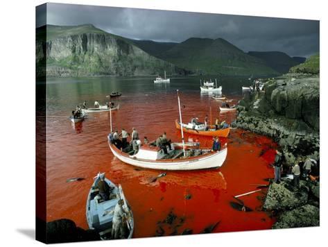 Whaling, Faroe Islands (Faeroes), North Atlantic-Adam Woolfitt-Stretched Canvas Print