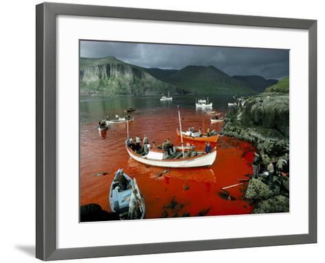 Whaling, Faroe Islands (Faeroes), North Atlantic-Adam Woolfitt-Framed Art Print
