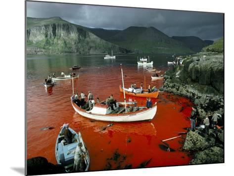 Whaling, Faroe Islands (Faeroes), North Atlantic-Adam Woolfitt-Mounted Photographic Print
