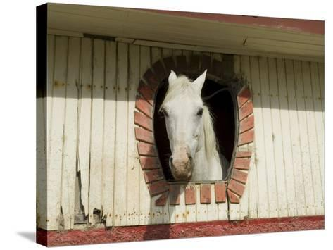Horse in Stables on Way to Monteverde, Costa Rica, Central America-R H Productions-Stretched Canvas Print