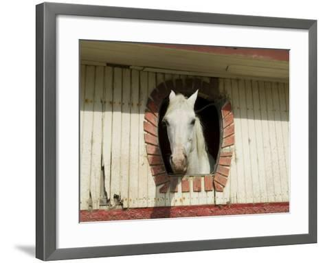 Horse in Stables on Way to Monteverde, Costa Rica, Central America-R H Productions-Framed Art Print