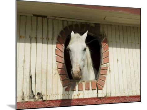 Horse in Stables on Way to Monteverde, Costa Rica, Central America-R H Productions-Mounted Photographic Print