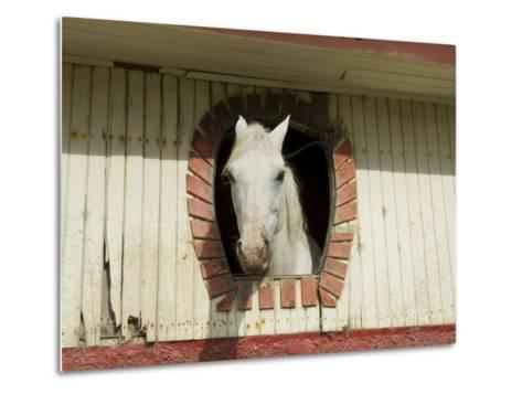 Horse in Stables on Way to Monteverde, Costa Rica, Central America-R H Productions-Metal Print