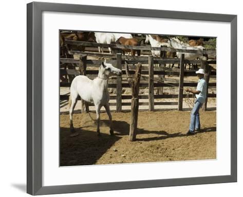 Horses, Hacienda Guachipelin, Near Rincon De La Vieja National Park, Guanacaste, Costa Rica-R H Productions-Framed Art Print