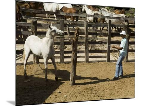 Horses, Hacienda Guachipelin, Near Rincon De La Vieja National Park, Guanacaste, Costa Rica-R H Productions-Mounted Photographic Print