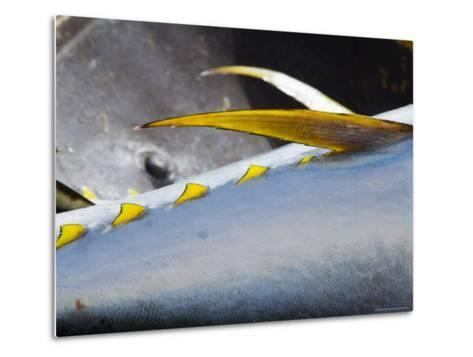 Yellow Fin Tuna on Beach at Santa Maria on the Island of Sal (Salt), Cape Verde Islands, Africa-R H Productions-Metal Print