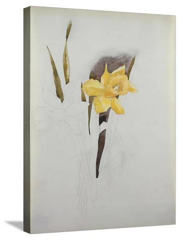 Study of Daffodils-George Wesley Bellows-Stretched Canvas Print