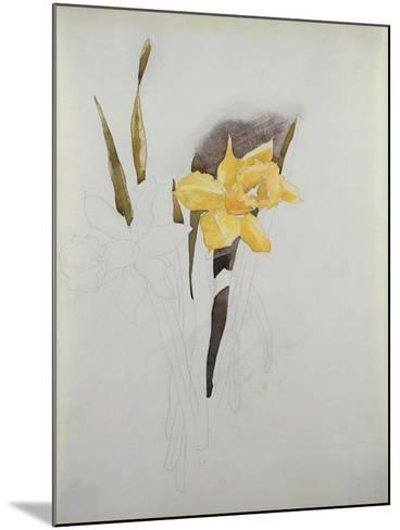Study of Daffodils-George Wesley Bellows-Mounted Giclee Print