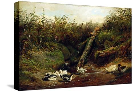 Ducks at a Brook, 1872-Arthur Fitzwilliam Tait-Stretched Canvas Print