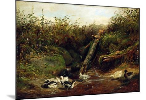Ducks at a Brook, 1872-Arthur Fitzwilliam Tait-Mounted Giclee Print