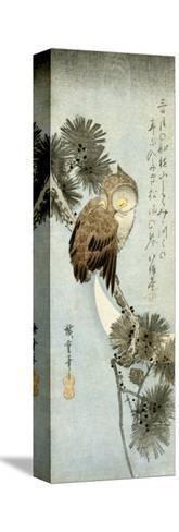The Crescent Moon and Owl Perched on Pine Branches, Chu-Tanzaku-Kishi Chikudo-Stretched Canvas Print
