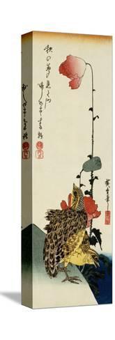 Quail and Wild Poppies-Kishi Chikudo-Stretched Canvas Print