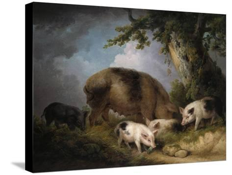 A Sow and Her Four Piglets in a Wooded Landscape-Henry Thomas Alken-Stretched Canvas Print