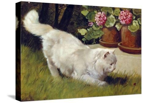 A White Persian Cat with a Ladybird-Cecil Aldin-Stretched Canvas Print