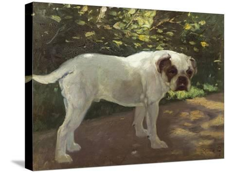 A Bulldog on a Garden Path-Cecil Aldin-Stretched Canvas Print
