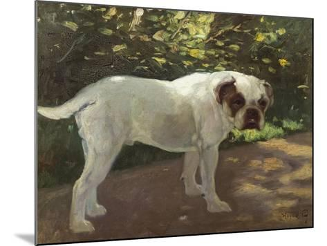 A Bulldog on a Garden Path-Cecil Aldin-Mounted Giclee Print