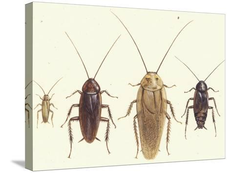 Close Views Illustrate Various Parts of a Cockroach-Paul M. Breeden-Stretched Canvas Print