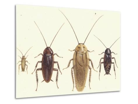 Close Views Illustrate Various Parts of a Cockroach-Paul M. Breeden-Metal Print
