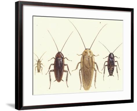 Close Views Illustrate Various Parts of a Cockroach-Paul M. Breeden-Framed Art Print