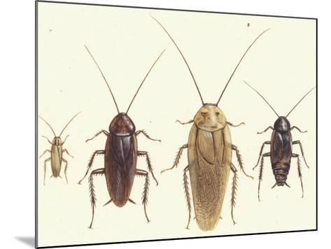 Close Views Illustrate Various Parts of a Cockroach-Paul M. Breeden-Mounted Giclee Print