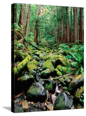 Rainforest in Sol Duc Rain Forest, Olympic National Park, Washington-John Elk III-Stretched Canvas Print