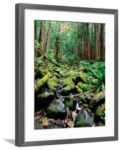Rainforest in Sol Duc Rain Forest, Olympic National Park, Washington-John Elk III-Framed Art Print