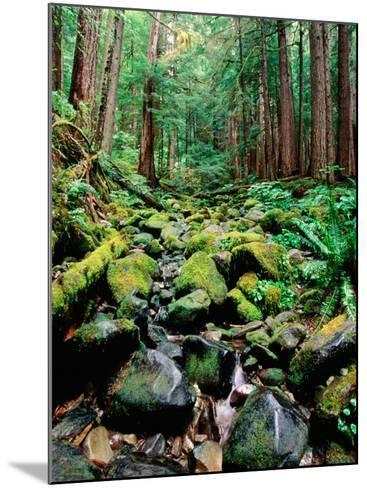 Rainforest in Sol Duc Rain Forest, Olympic National Park, Washington-John Elk III-Mounted Photographic Print
