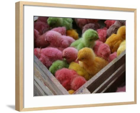 Coloured Chicks for Sale at a Market in the City Centre, Padang, West Sumatra, Indonesia-Paul Kennedy-Framed Art Print