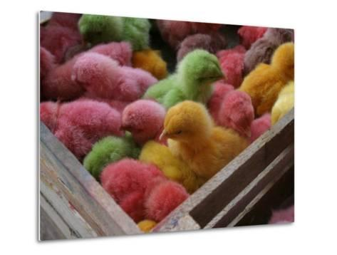 Coloured Chicks for Sale at a Market in the City Centre, Padang, West Sumatra, Indonesia-Paul Kennedy-Metal Print