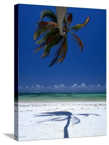 Horizontal Palm Tree and Its Shadow on White-Sand Bweju Beach, Zanzibar, Tanzania-Greg Elms-Stretched Canvas Print