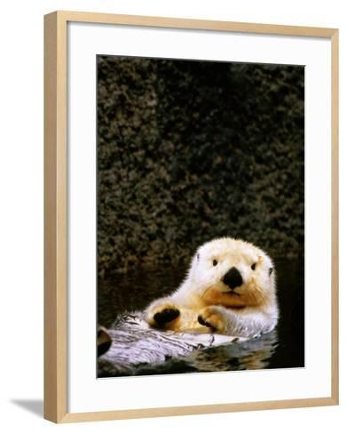 Sea Otter Floating on Its Back, Point Defiance Zoo, Tacoma, Washington-Mark Newman-Framed Art Print