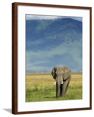 African Elephant, Ngorongoro Crater, Arusha, Tanzania-Ariadne Van Zandbergen-Framed Art Print