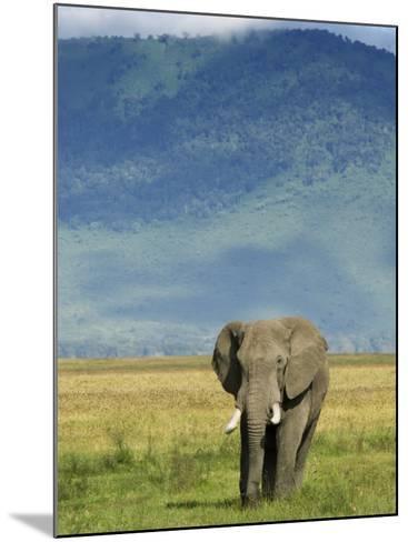 African Elephant, Ngorongoro Crater, Arusha, Tanzania-Ariadne Van Zandbergen-Mounted Photographic Print