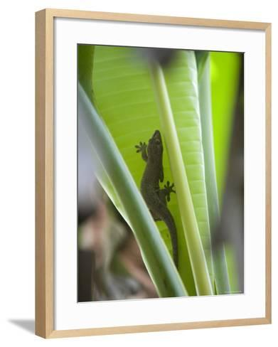 Gecko on Leaf, Cousin Island Special Reserve Near Praslin Island, Cousin Island-Holger Leue-Framed Art Print