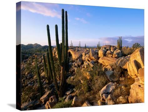 Cacti and Boulder Field, Catavina, Ensenada, Baja California, Mexico-John Elk III-Stretched Canvas Print