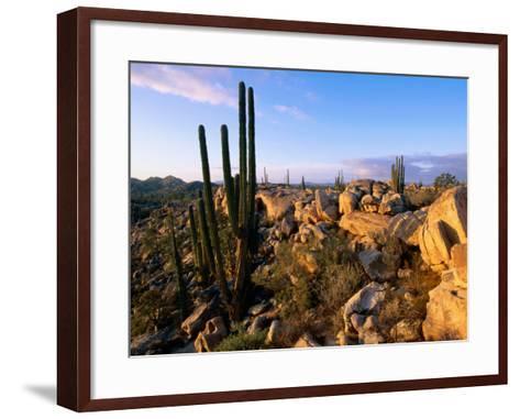 Cacti and Boulder Field, Catavina, Ensenada, Baja California, Mexico-John Elk III-Framed Art Print
