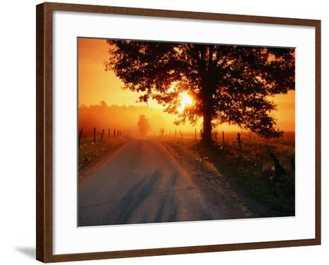 Tree and Road at Sunrise, Cades Cove, Great Smoky Mountains National Park, Tennessee-John Elk III-Framed Art Print