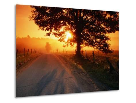 Tree and Road at Sunrise, Cades Cove, Great Smoky Mountains National Park, Tennessee-John Elk III-Metal Print