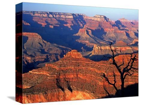 Grand Canyon from South Rim Near Yavapai Point, Grand Canyon National Park, Arizona-David Tomlinson-Stretched Canvas Print