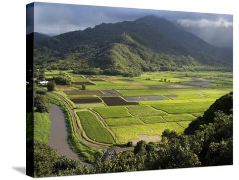 Hanalei Valley with Taro Fields Below, Kauai, Hawaii-John Elk III-Stretched Canvas Print