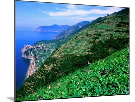 Vineyards from Trail Above Corniglia, Cinque Terre, Liguria, Italy-John Elk III-Mounted Photographic Print