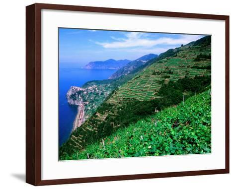 Vineyards from Trail Above Corniglia, Cinque Terre, Liguria, Italy-John Elk III-Framed Art Print