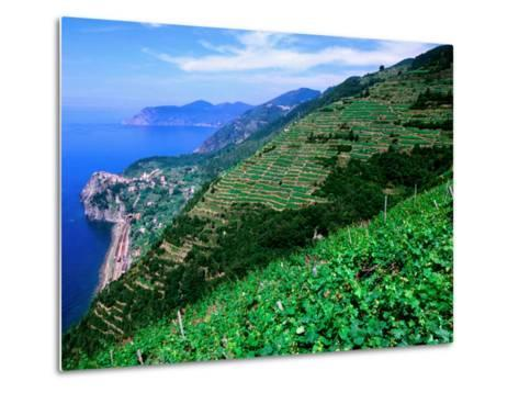 Vineyards from Trail Above Corniglia, Cinque Terre, Liguria, Italy-John Elk III-Metal Print