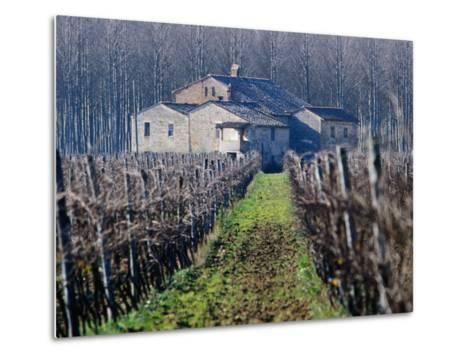 Winery Vines and Buildng, Torgiano, Umbria, Italy-Oliver Strewe-Metal Print