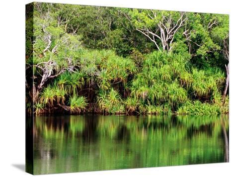 Mardugal Billabong, Kakadu National Park, Northern Territory, Australia-John Banagan-Stretched Canvas Print