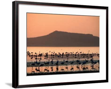Flamingos Silhouetted in Lake Abiata, Abiyata-Shala National Park, Oromia, Ethiopia-Ariadne Van Zandbergen-Framed Art Print